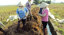 Công nghệ xử lý rơm rạ tại ruộng làm phân bón sinh học nhằm bảo vệ môi trường và phát triển nông nghiệp bền vững