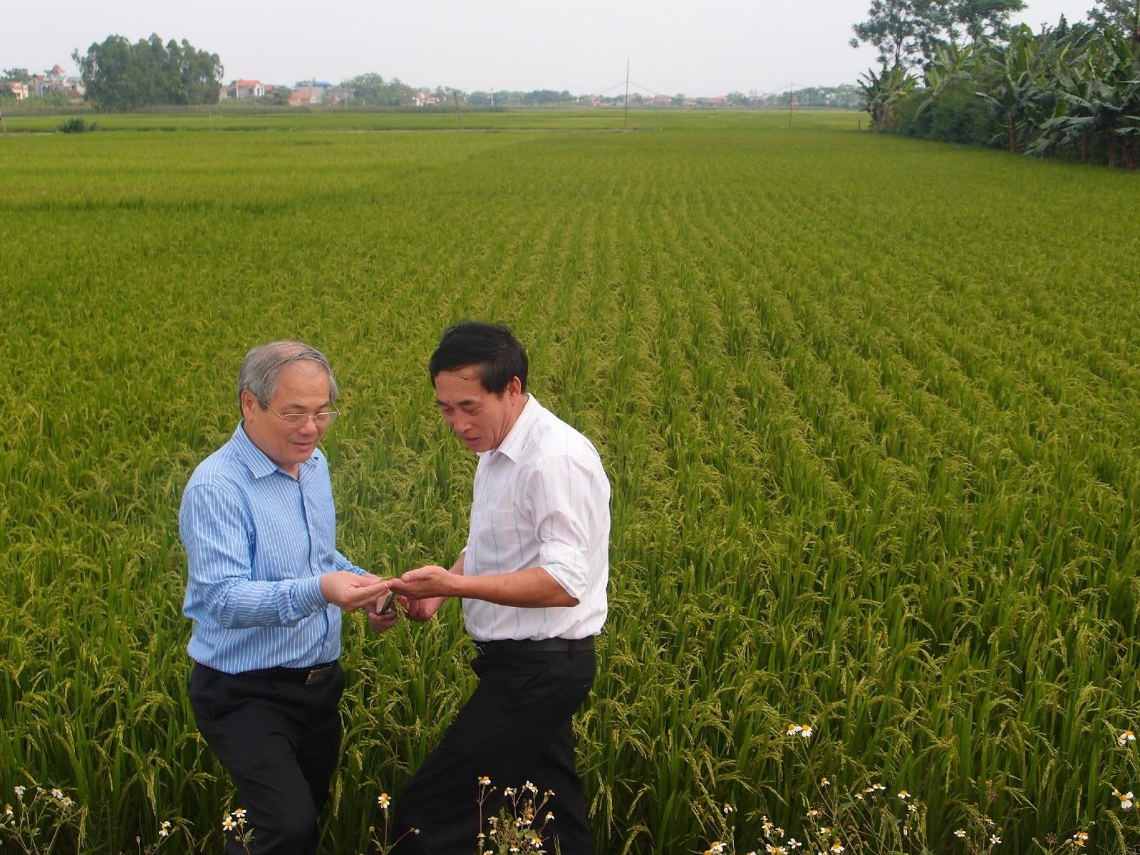 """Kiểm tra mô hình dự án """"Áp dụng công nghệ sinh học để sản xuất giá thể mạ và mạ công nghiệp phục vụ cơ giới hóa trong sản xuất nông nghiệp tại Thành phố Hà Nội"""""""