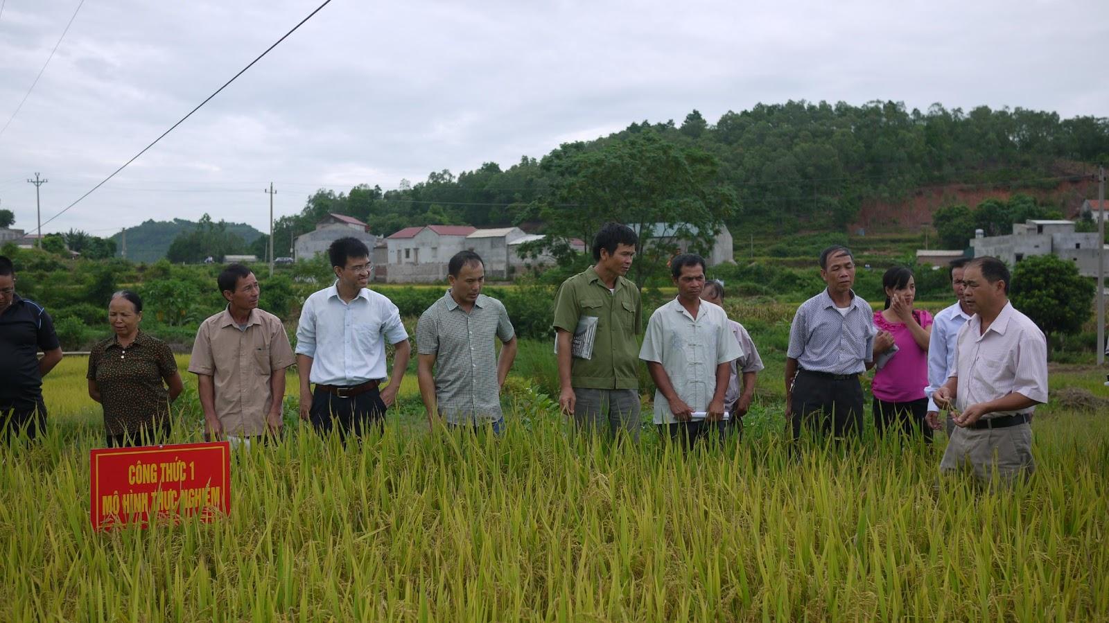 """Hội nghị đầu bờ """"Đánh giá hiệu quả sản phẩm phân ủ hữu cơ  sử dụng chế phẩm Fito-Biomix RR bón cho cây lúa"""""""