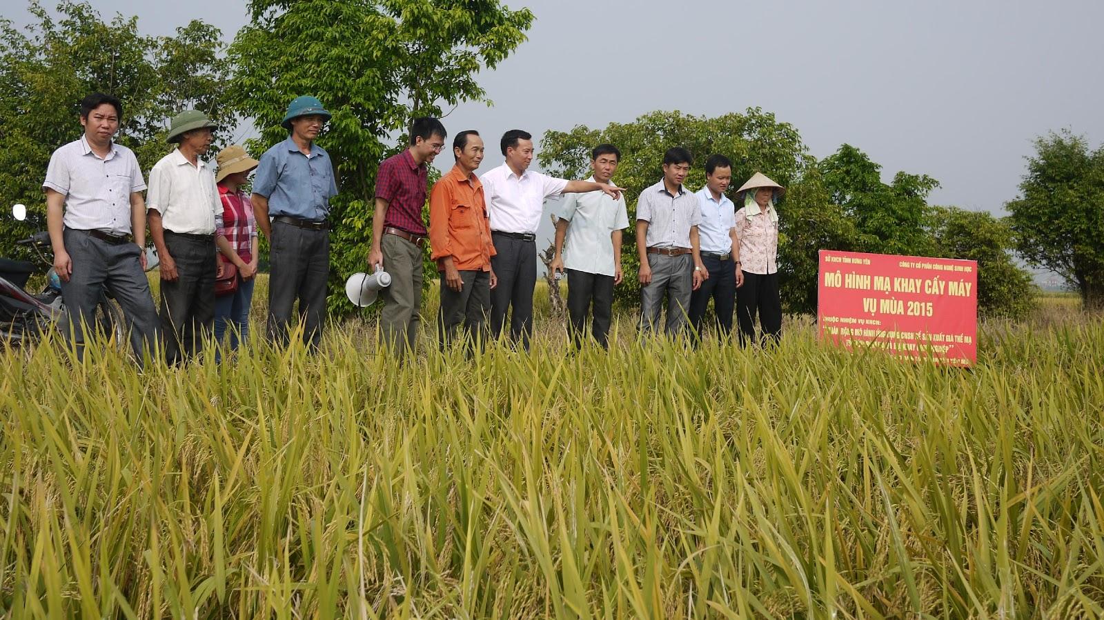 Hội nghị đầu bờ đánh giá kết quả thực hiện nhiệm vụ KHCN tại Hưng Yên